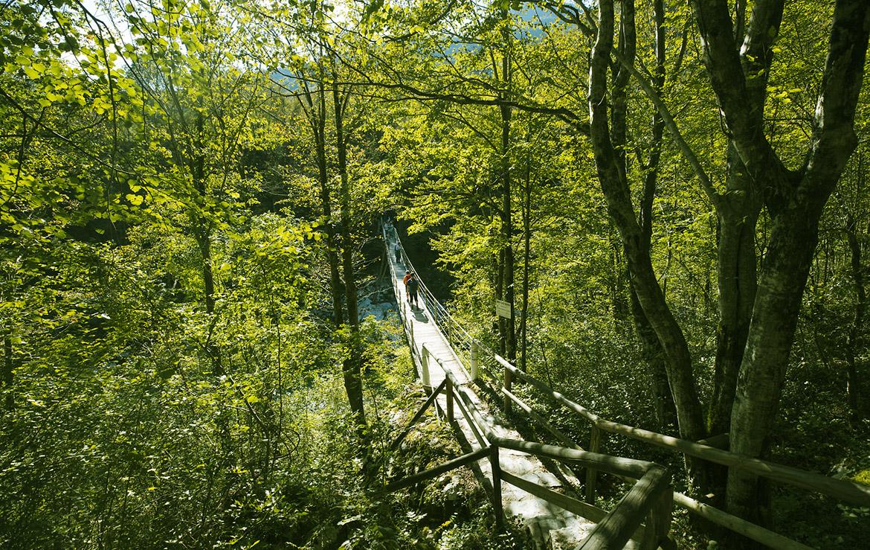 puente sobre un rio en un bosque esloveno