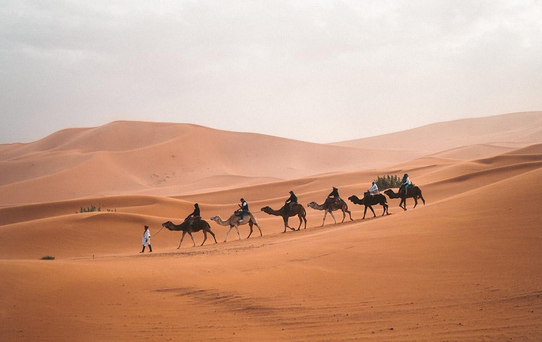 Caravana de camellos en el desierto marroquí
