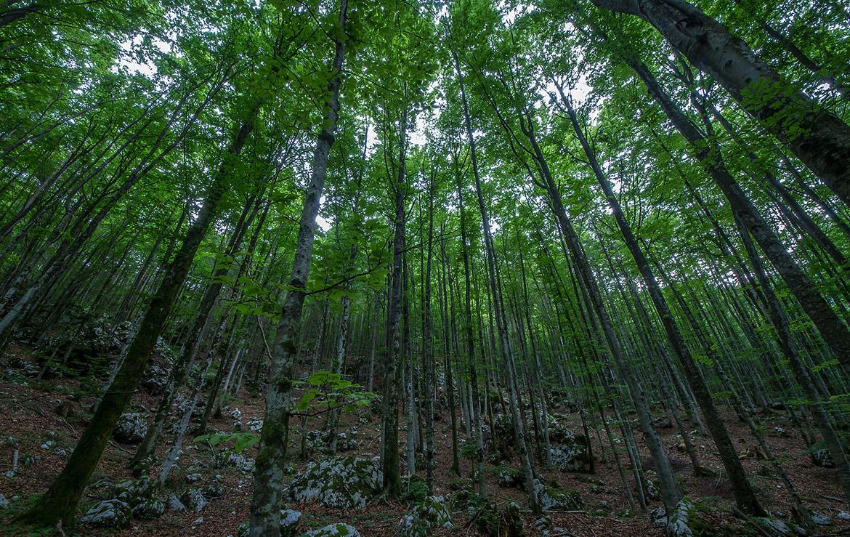 bosque en los alpes julianos