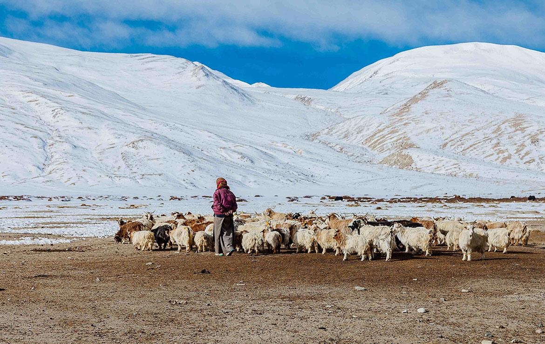 Pastor de cabras en el Upper Mustang Nepal